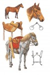CAVALRY MOUNT AND EQUIPMENT